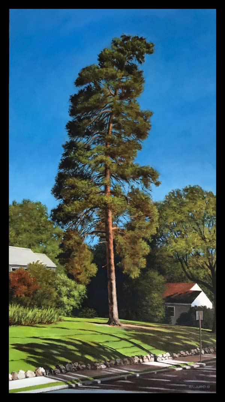 Dean Gilliland: Scots Pine