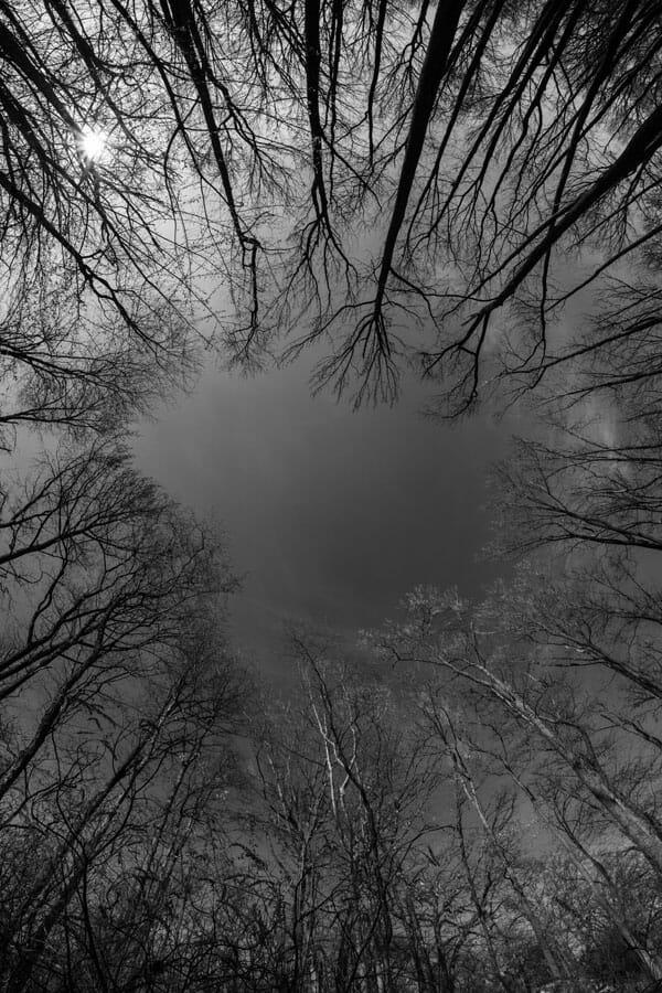 Mark Harris: Open to the Sky