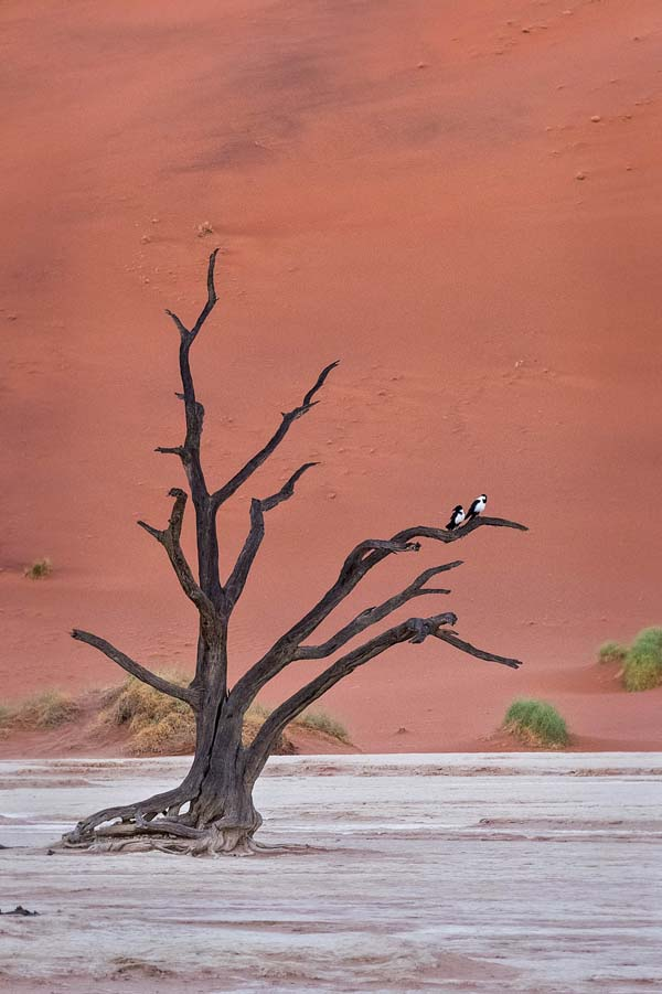 Woody Eisenberg: Two Pied Crows in the Vlei